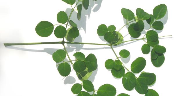 moringa-leaves
