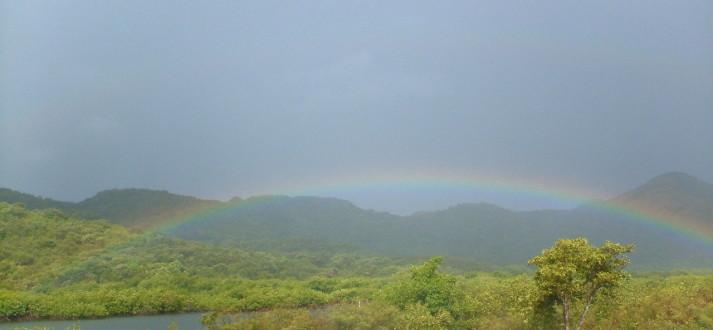 rainbow FI 2