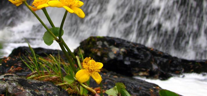 under-waterfall-FI