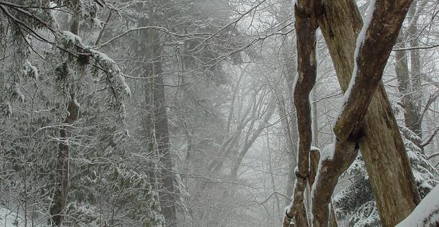 snow-storm-4=139 FI SCD