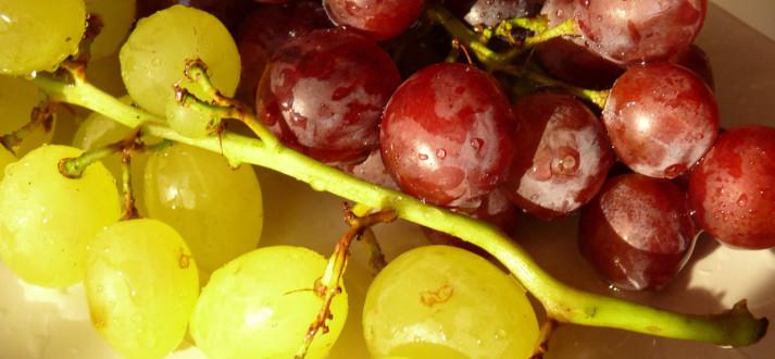 grape-FI SC