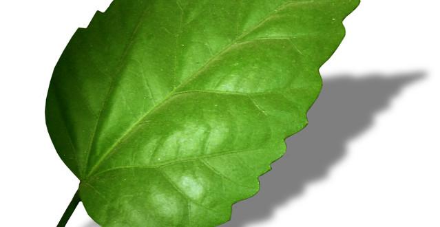 leaf-FI SC