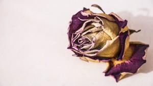 flower-2439720_1920